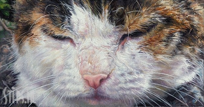 Cat Eyes – Adriana van Zoest – giclee