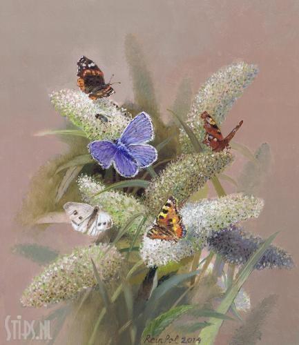 vlinderstruik olieverf op paneel rein pol