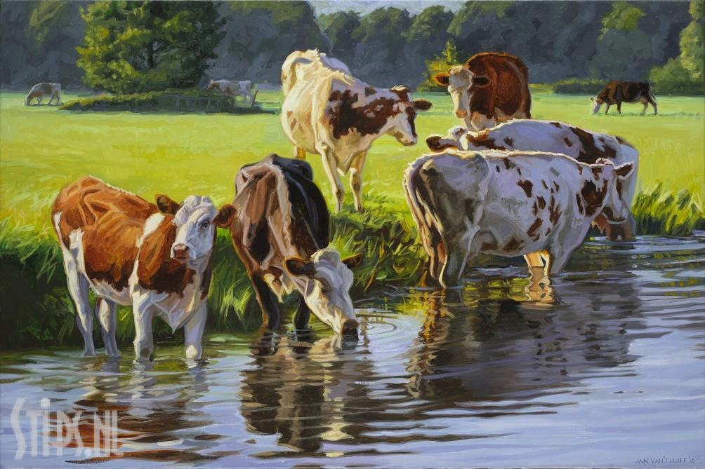 Roodbont vee langs de rivier – Jan van 't Hoff – giclee