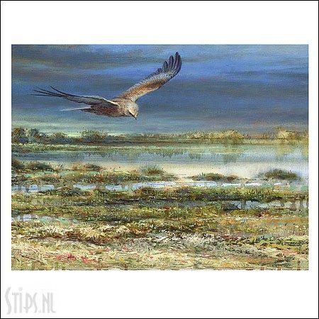 Bruine Kiekendief – kunstkaart Erik van Ommen