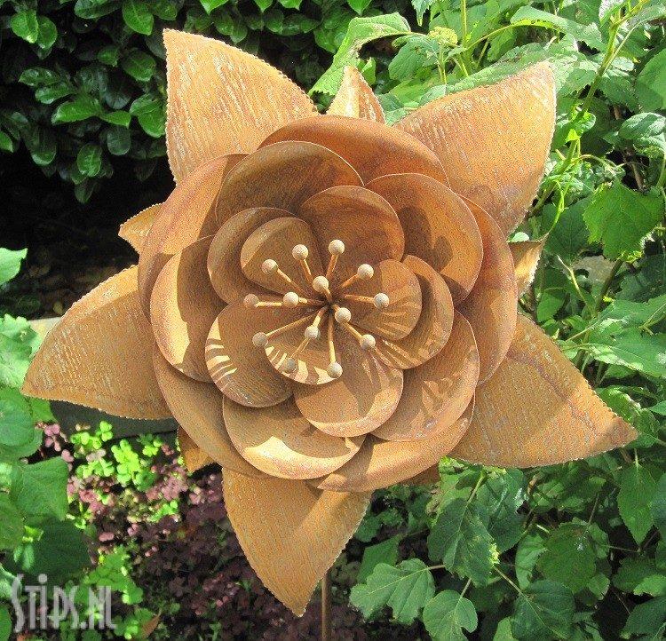 Lotus Bloem geroest