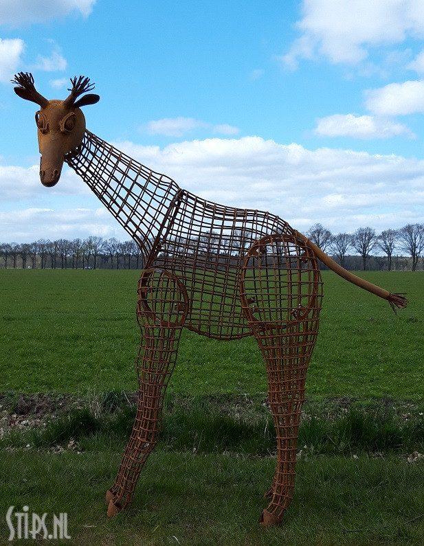 Grote giraffe – opengewerkt
